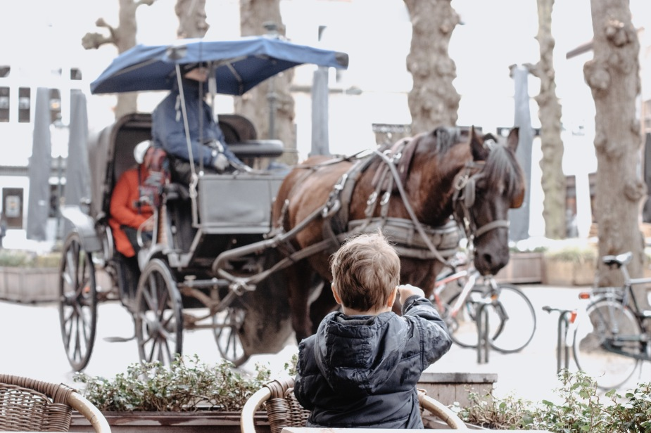 Horse carriage rides in Bruges